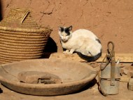 Moroccan kitty