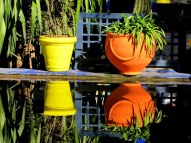 Jardin Majorelle gardens, Marrakech