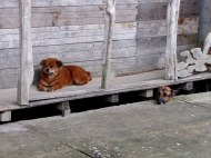 Who's that doggy under the porch?
