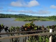 Napo River, Ecuadorian Amazon
