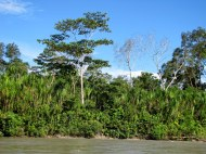 Napo River, Ecuadorian Amazon