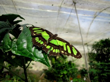 Visit to a butterfly farm