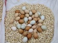 Salcedo Market - No plain old white eggs here
