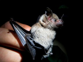 Bat lecture at Tirimbina Biological Reserve