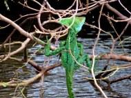 Basilisks Lizard