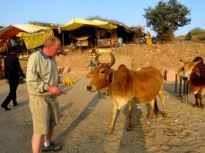 After giving offerings at the temple you are given a blessing in return. I'm feeding it to the cow nearby.