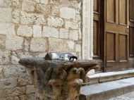 Tired kitty next to Saint Emeliano Church, Trevi