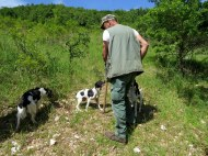 Truffle hunting experience, Pettino