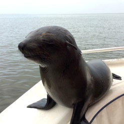 Walvis Bay cruise