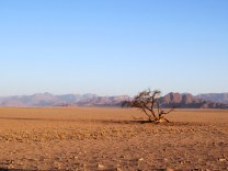 Total emptiness in the Namib Desert
