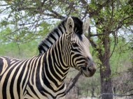 Ongava Game Reserve
