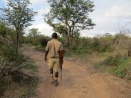 "Our initial ""walk"" to find white rhino's."