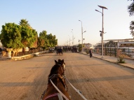 Carriage ride to the Temple of Edfu