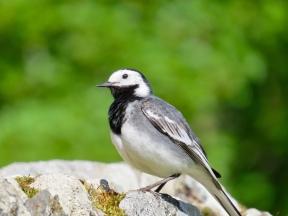 Random Scottish Bird