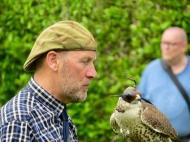 Falconry display at Dunrobin Castle