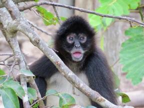 Aluxes Ecoparque in Palenque