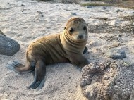Adorable baby sea-lion