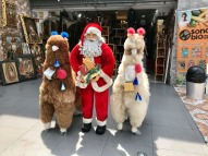 Santa and his llamas